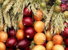 Состав и пищевая ценность основных сортов лука